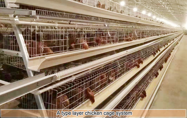 A type tier layer cage